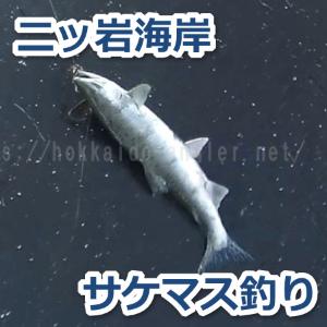 鮭 釣り 情報 北海道